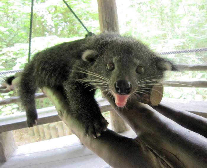 泰国芭堤雅绿山国家动物园门票
