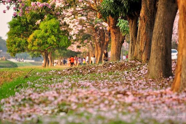 """市內有泰國歷史最久、規模最大的佛統金塔,高127米,為世界最高佛塔。市郊2公裏還有佛統行宮。位於市中心的大金塔,泰文稱帕巴吞金塔,是泰國最高、最古老、最壯麗的佛塔。金塔之東4公裏有一小塔,名帕巴通佛塔。據傳,始建金塔的披耶攀,建此塔以紀念他的養母。金塔以西約2公裏的府行政公署,原是曼谷王朝拉瑪六世王的行宮,叫沙南莊,意為""""月宮"""",也稱新王府。宮中有大小宮殿6所,其中沙瑪奇默穆宮為典型的泰式建築,十分富麗,當年用以供臣屬覲見,今為俱樂部。差裏蒙空抑宮則為古西洋式。行宮中建有人身象頭的"""