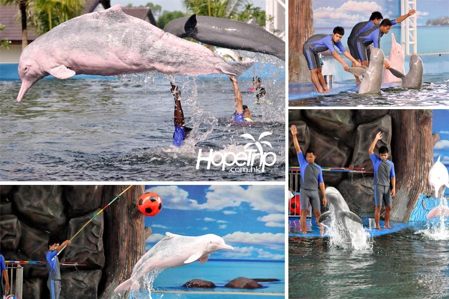 泰国芭堤雅粉红海豚湾乐园门票