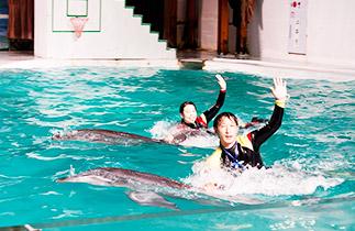 韓國濟州島太平洋樂園門票,濟州島太平洋樂園門票,韓國濟州島海洋世界